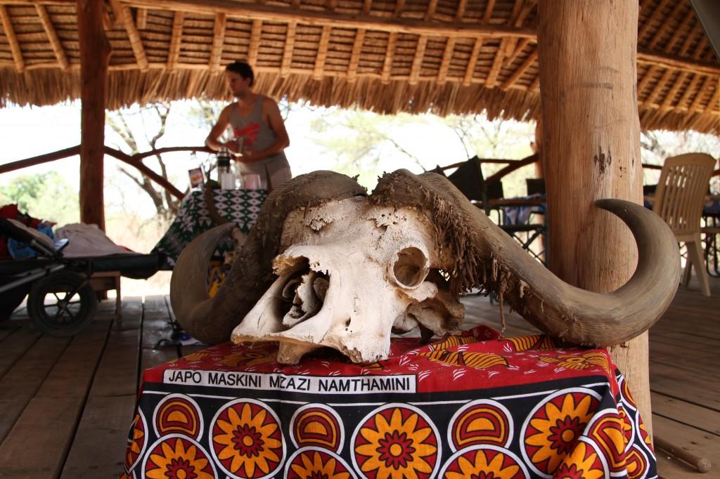 Buffalo skull, Lale'enok